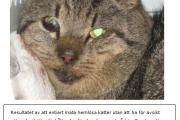 Mata hemlösa katter