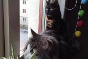 Neo och Olivia